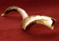 shofar-elul_hp2-200x139