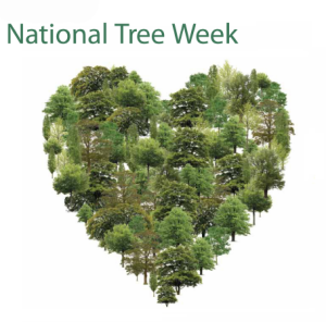 national-tree-week-tree-council-poster (1)